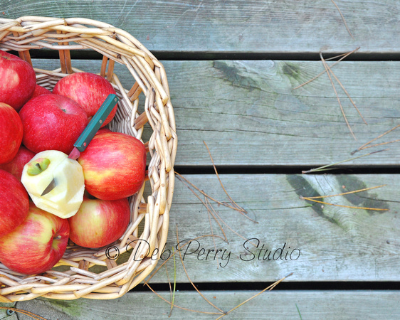Fall Harvest: Honey Crisp Apples 3